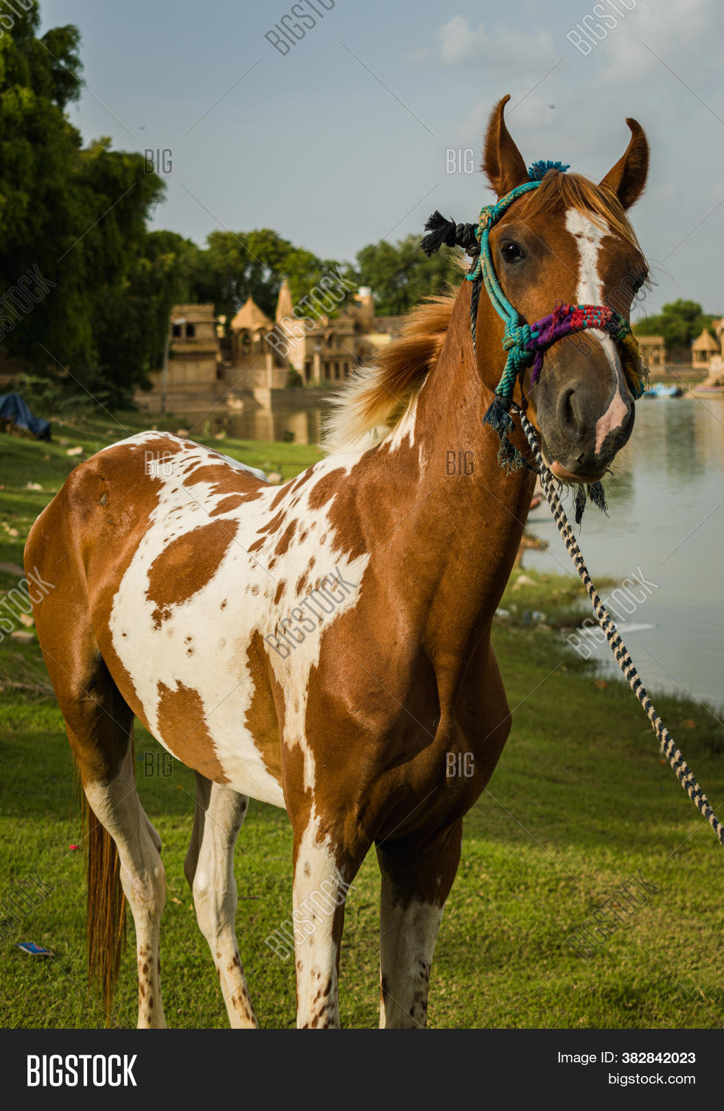 Baby Horse Standing Image Photo Free Trial Bigstock