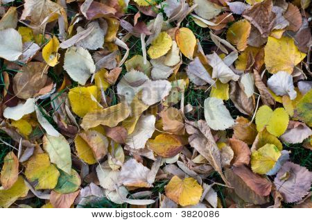 Leafs Texture