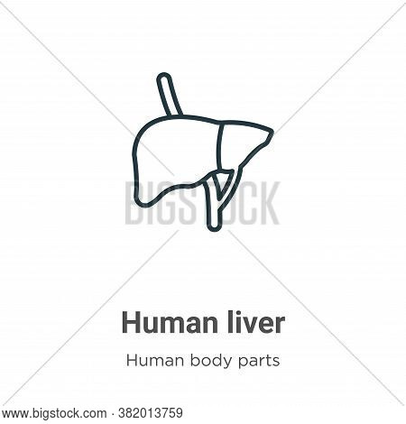 Human liver icon isolated on white background from human body parts collection. Human liver icon tre