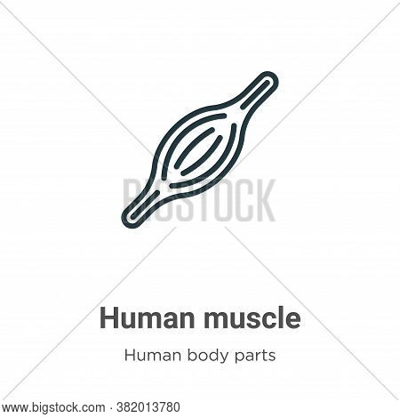 Human muscle icon isolated on white background from human body parts collection. Human muscle icon t