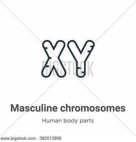 Masculine chromosomes icon isolated on white background from human body parts collection. Masculine