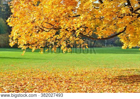 Golden Autumn In The Beautiful Park In Porvoo