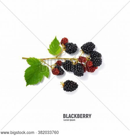 Isolated Berries. Three Fresh Blackberry Fruits With Leaves Isolated On White Background