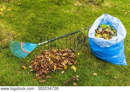 Fallen Leaves In And Near Plastic Bag And Rake On Still Green Grass Background. Autumn Landscape.  F