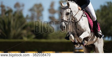 Sport Horse Jumping Over A Barrier On A Obstacle Course