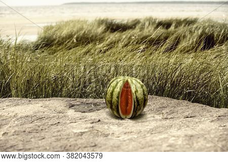 Watermelon On The Surface Of A Wet Stone, In A Reed Thicket
