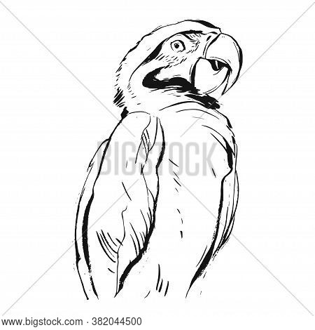 Hand Drawn Vector Abstract Graphic Ink Realistic Tropical Parrot Illustration Isolated On White Back