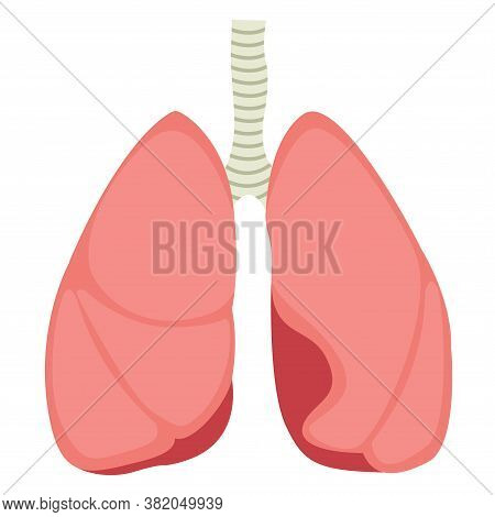 Vector Illustration Of Human Lungs In Flat Style. Lungs Icon, Isolated On White Background. Lungs Of