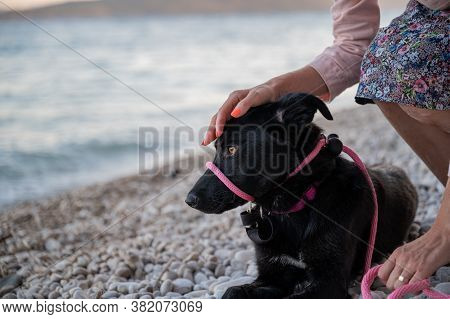Closeup View Of A Woman With Bright Orange Manicure Kneeling Down To Pat Her Beautiful Black Shepher
