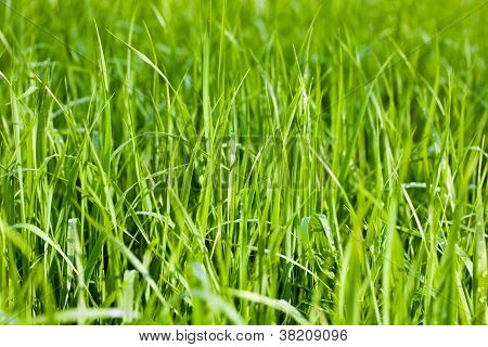 Green Grass Fields