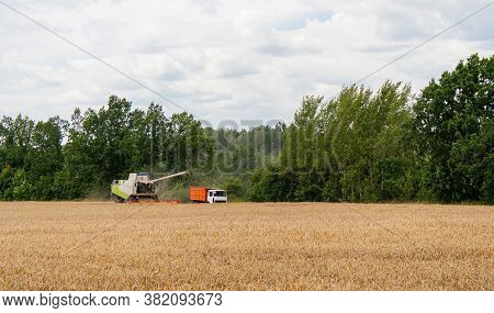 Collecting Wheat Grain With Modern Harvester Unloading Seeds Into Truck Trailer In Distance. Harvest