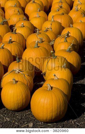 Pumpkin Army