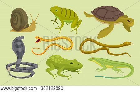 Reptiles Set. Lizard Snake Turtles Snail Cartoon Vector Wild Animals. Lizard And Turtle, Snake Anima