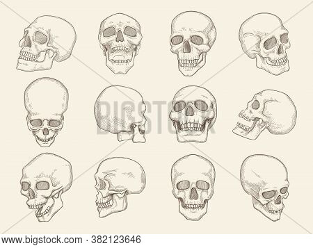 Human Skull. Anatomy Pictures Of Head Bones With Eyes And Mouth Vector Illustrations Of Skull In Dif