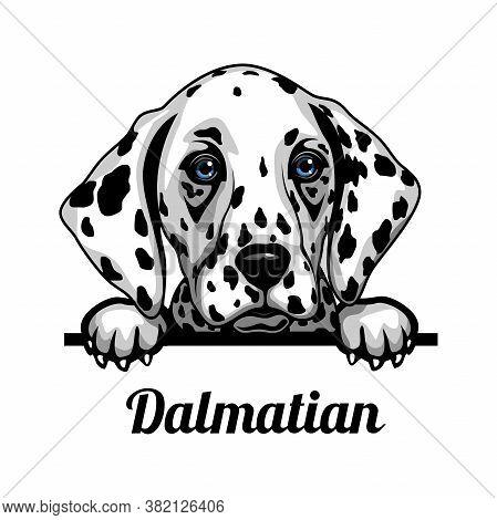 Dalmatian - Color Peeking Dogs - Breed Face Head Isolated On White