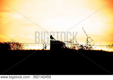 Silhouette Of Native Bird Of The Atlantic Forest Perched In The Late Afternoon