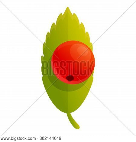 Rowan Berry Icon. Cartoon Of Rowan Berry Vector Icon For Web Design Isolated On White Background