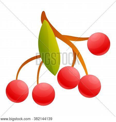 Rowan Foliage Icon. Cartoon Of Rowan Foliage Vector Icon For Web Design Isolated On White Background