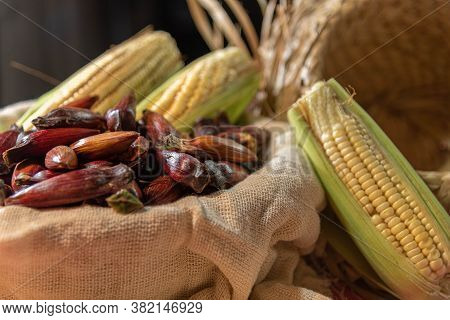 Pine Nuts (araucaria Angustifolia) And Green Corn Cobs Prepared For Consumption At June Parties In B