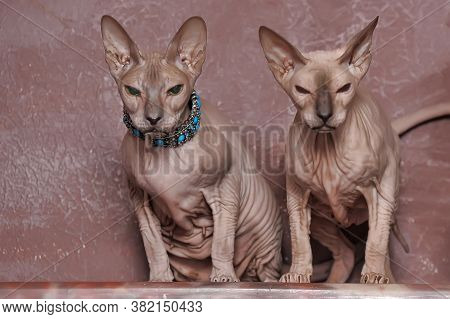 Two Cats Of The Sphinx With Necklaces On The Neck