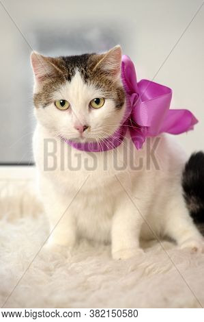 Cat With A Bow At The Neck