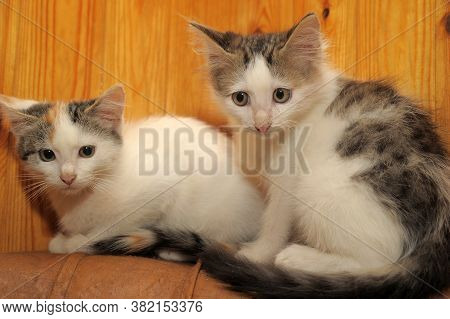 Two Kittens With Miserable Faces  Close Up