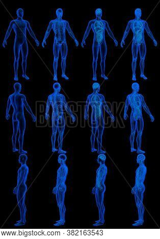 12 X-ray Hologram Renders Of Male Body With Skeleton And Internal Organs - Anatomy Concept For Scien