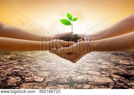 Hands Holding Tree Growing On Cracked Earth. Saving Environment And Natural Conservation Concept Wit