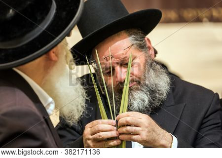 JERUSALEM, ISRAEL - SEPTEMBER 20, 2018: Religious men - Jews in black hats carefully choose lulav. Pre-holiday bazaar in Jerusalem. The concept of religious, ethnographic and photo tourism