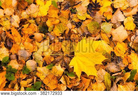 Fall leaves in the park. Diffusion filter applied. Focus at the fall leaves on the ground, fallen autumn leaves, closeup. Fall background, fall leaves, fall nature