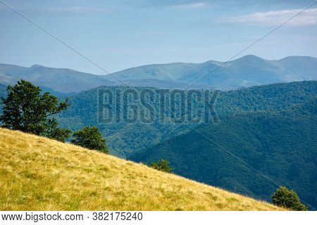 Primeval Beech Forest On The Mountain Meadow. Beautiful Landscape In Summer. Grass And Trees On The