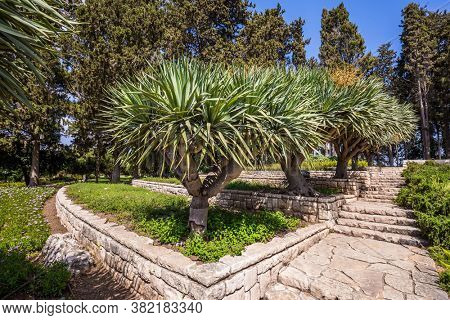 Magnificent park on the slopes of Mount Carmel. Israel. Green flowerbeds are planted with ledges on the side of a mountain overlooking the sea. Step