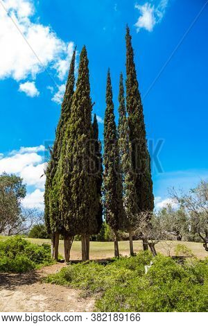 Scenic desert park around the Ben Gurion Memorial. Cypress Alleys. Israel. Steep rock on a natural plateau. View of the picturesque landscapes in the valleys of the Qing
