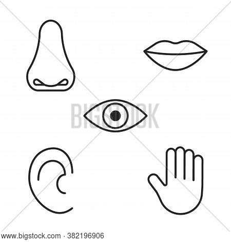 Icon Of Five Human Senses, Vision, Smell, Taste, Hearing, Touch. Line Sign Eye, Nose, Mouth, Ear, Ha