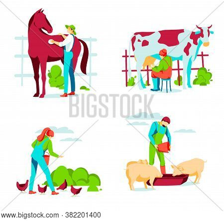 People Taking Care Of Animals On Farm. Male And Female Farm Workers Grooming, Feeding And Milking. L