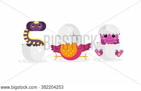 Cute Bird And Reptile Hatching From Egg Vector Set