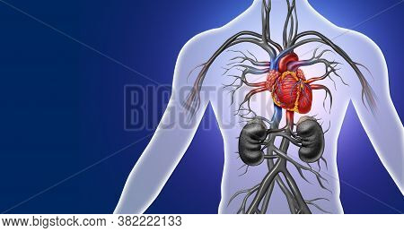 Human Heart Anatomy From A Healthy Body Isolated On White Background As A Medical Health Care Symbol