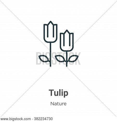 Tulip icon isolated on white background from nature collection. Tulip icon trendy and modern Tulip s