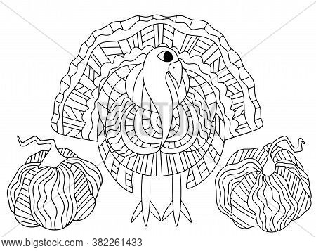 Alive Turkey Bird And Two Pumpkins Stock Vector Illustration. Happy Thanksgiving Day Coloring Page F