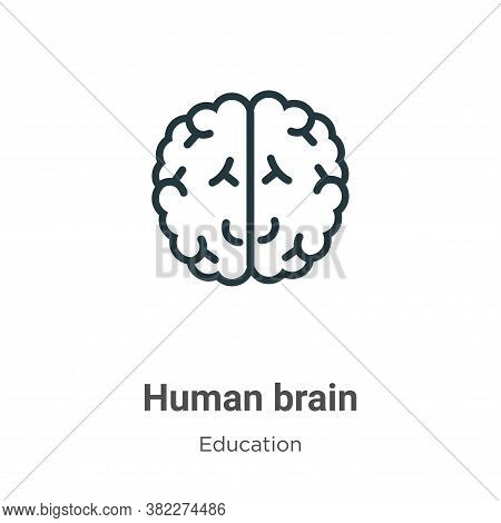 Human brain icon isolated on white background from education collection. Human brain icon trendy and