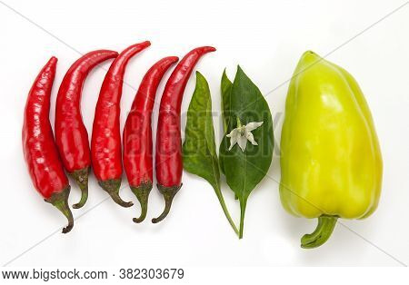 Hot Red Chili Pepper And Green Sweet Pepper Are Arranged In A Row On A White Background, Pepper Flow