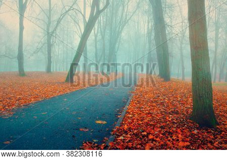 Fall picturesque November foggy landscape. Deserted fall park with bare trees and dry fallen red autumn leaves, fall nature scene
