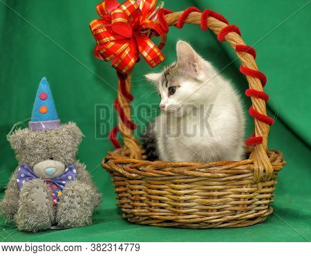 Little Kitten In A Gift Basket With A Bow