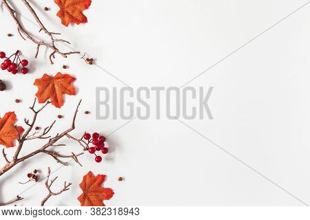 Autumn Composition. Maple Tree Leaves, Branches On Gray Background. Autumn, Fall, Thanksgiving Day C