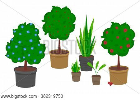Set Of Pot Plants With Flowers And Leaves. Group Of Trees And Bushes In Containers Isolated On White