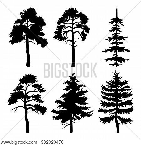 Silhouette Of Different Trees With Leaves Isolated On White Background. Tall Tree Thick Trunk Crown