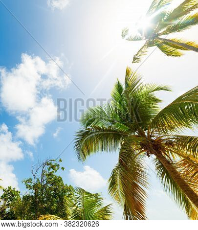 Palm Trees And Shining Sun In Guadeloupe, French West Indies. Lesser Antilles, Caribbean Sea