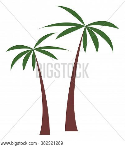 Palm Tree Vector Illustration. Tropical Plant Coconut Palm Isolated On White Background. Exotic Ever