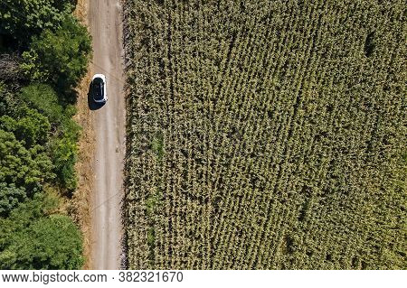 Aerial View Of Modern Car On The Road Near The Green Corn Field. Road Trip In Countryside. Auto Perf
