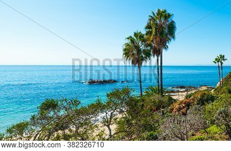 Palm Trees By The Sea In Laguna Beach Shore On A Sunny Day. California, Usa